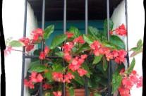 Flowers in Casa Rosa